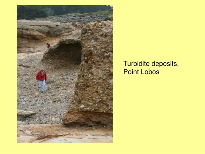 Turbidite deposits, Point Lobos