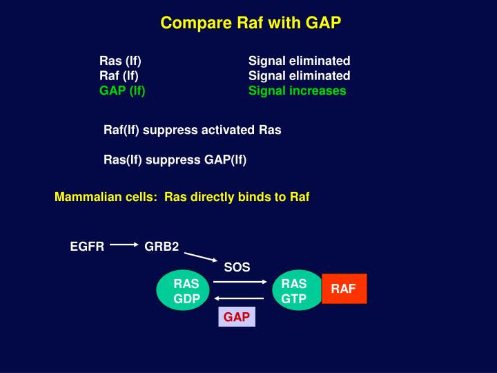 Compare Raf with GAP