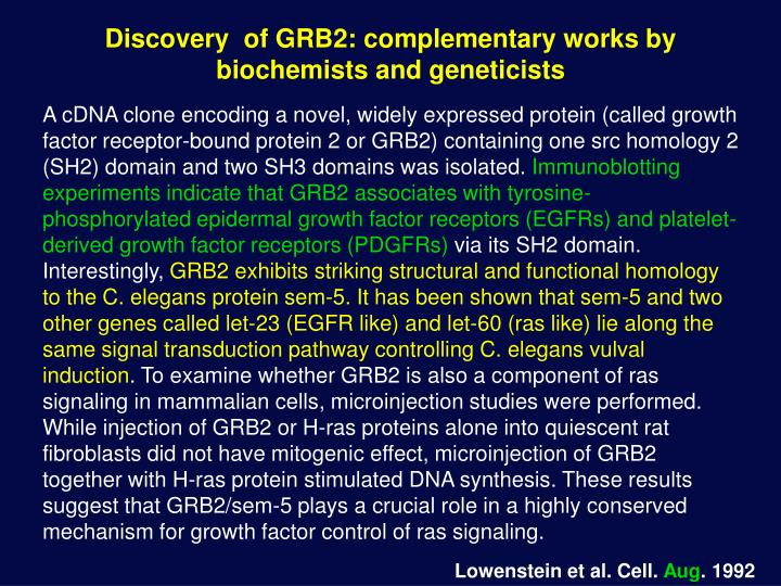 Discovery  of GRB2: complementary works by biochemists and geneticists