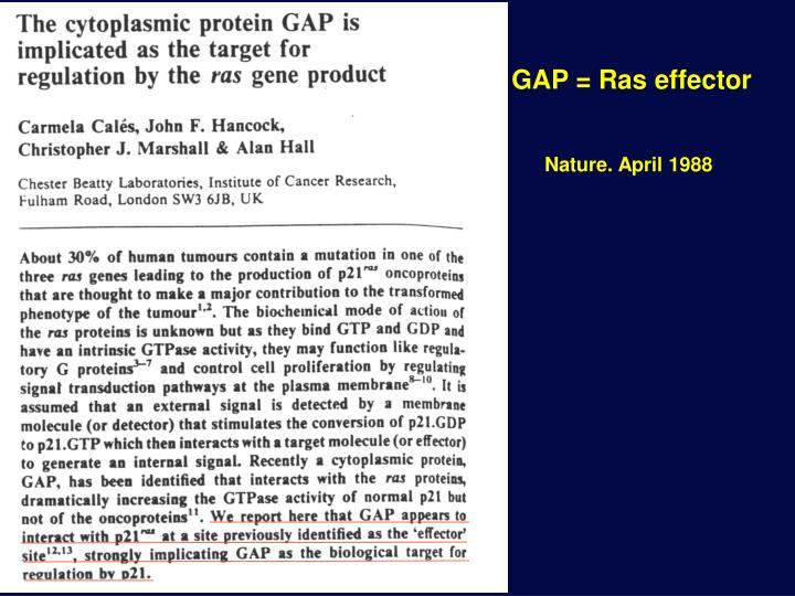 GAP = Ras effector