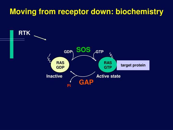 Moving from receptor down: biochemistry