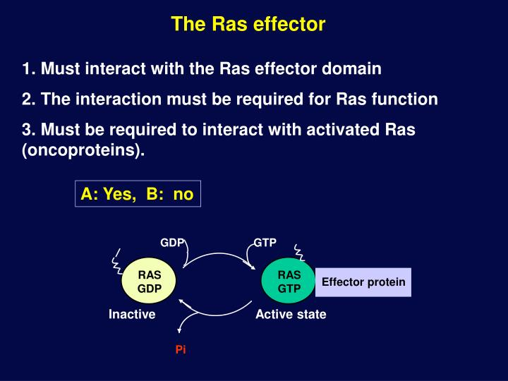 The Ras effector