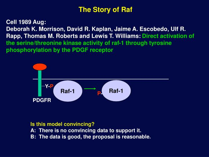 The Story of Raf