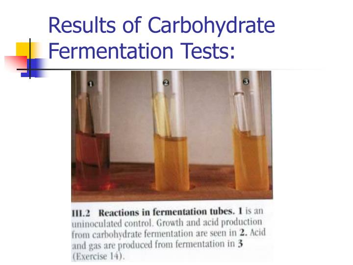 carbohydrate fermentation testing essay Proteus vulgaris is a rod-shaped,  according to laboratory fermentation tests,  and negative results for the remainder of the tests on the testing strip.