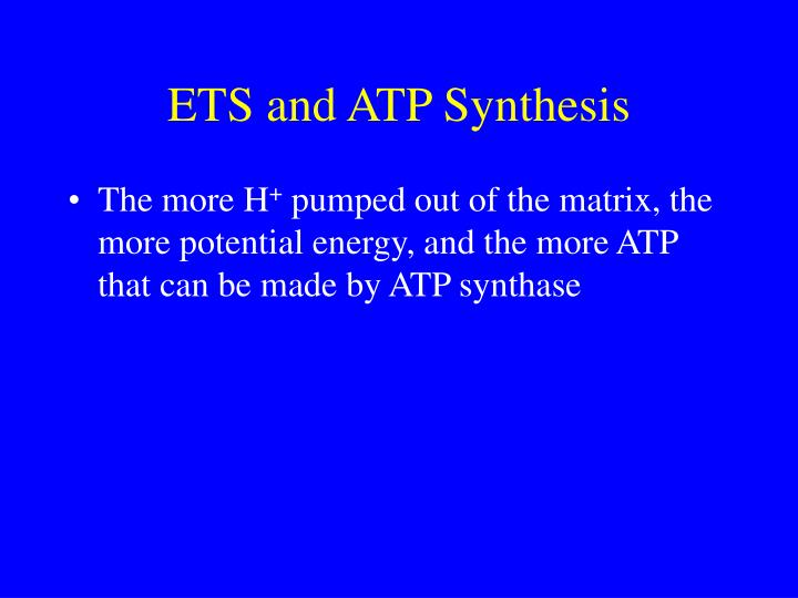 ETS and ATP Synthesis