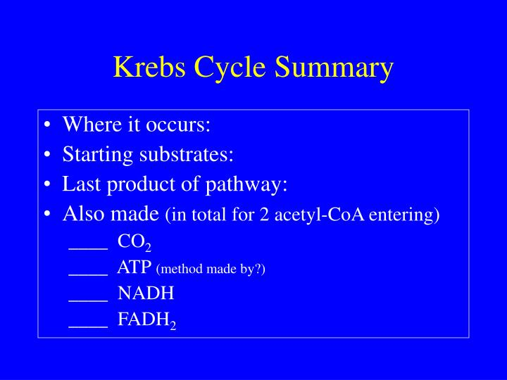 Krebs Cycle Summary