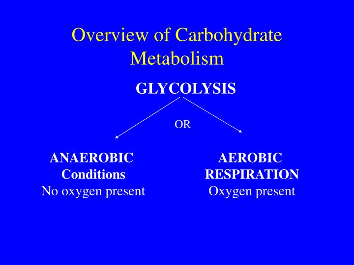 Overview of Carbohydrate Metabolism