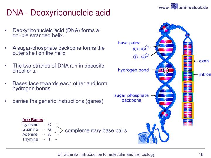 bio cell summary Useful as a summary or a revision resource for the aqa b1 cell biology topic.