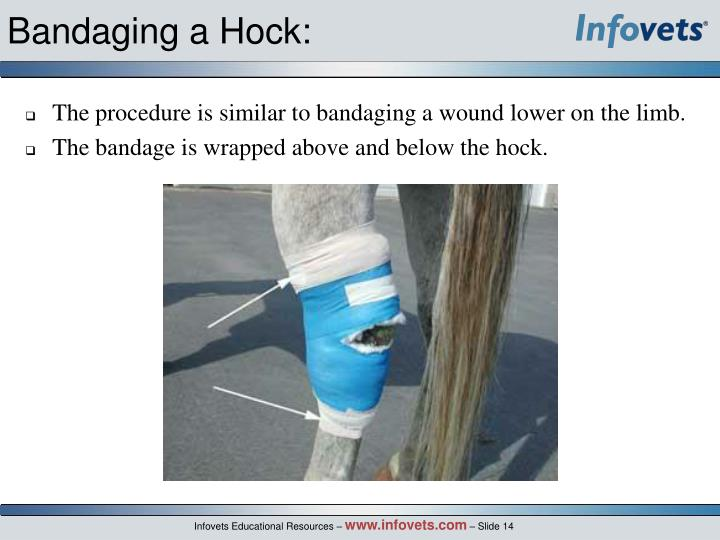 Bandaging a Hock:
