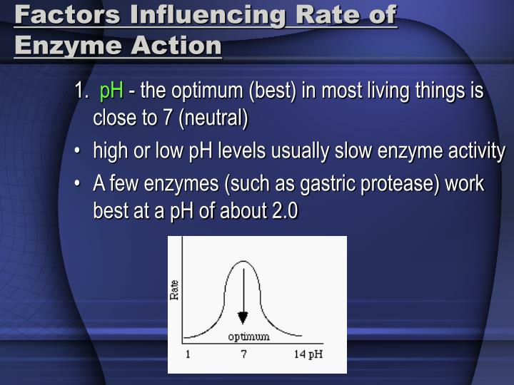 Factors Influencing Rate of Enzyme Action