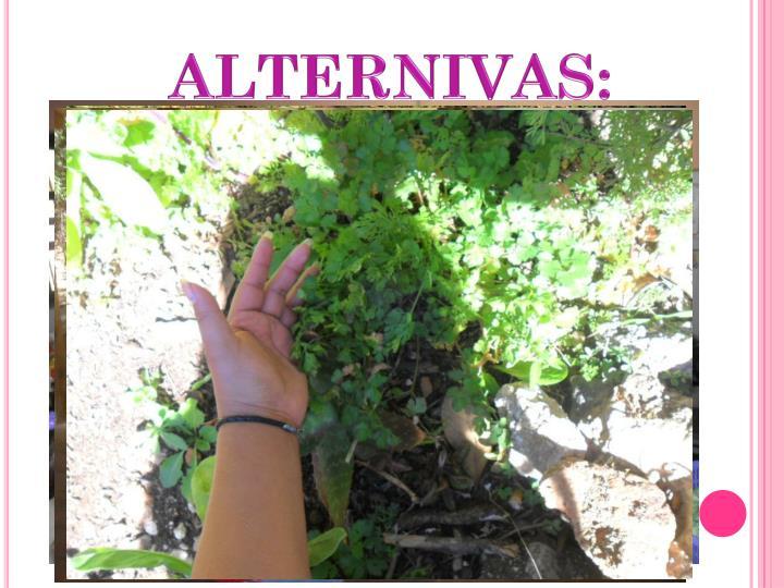 ALTERNIVAS: