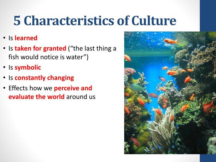 5 Characteristics of Culture