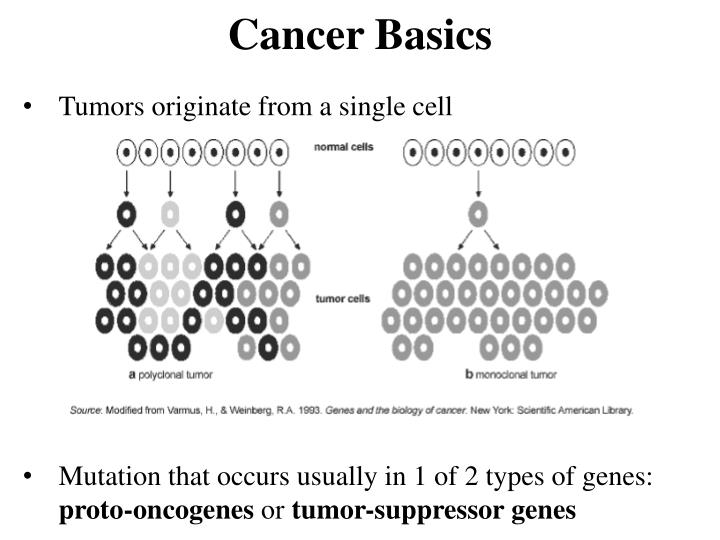 Cancer basics1