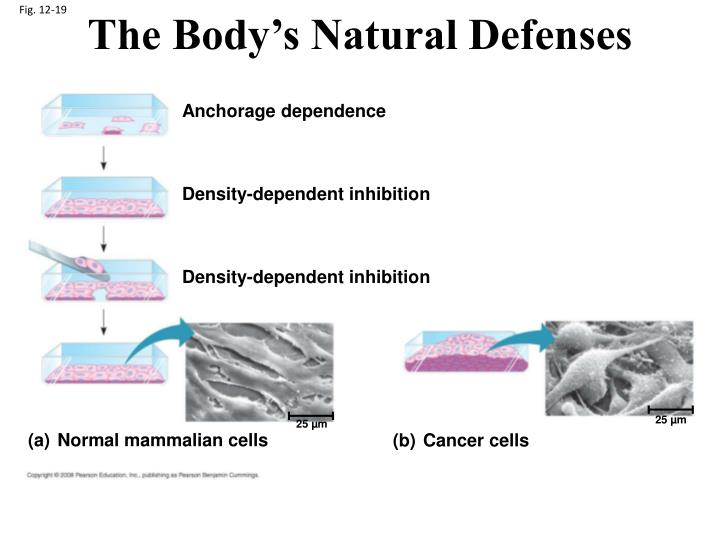 The Body's Natural Defenses