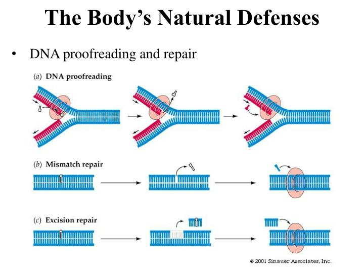 DNA proofreading and repair