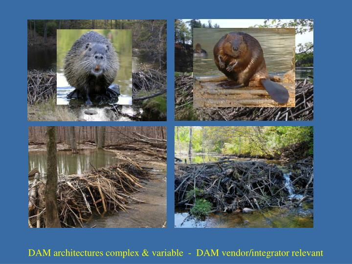 DAM architectures complex & variable  -  DAM vendor/integrator relevant