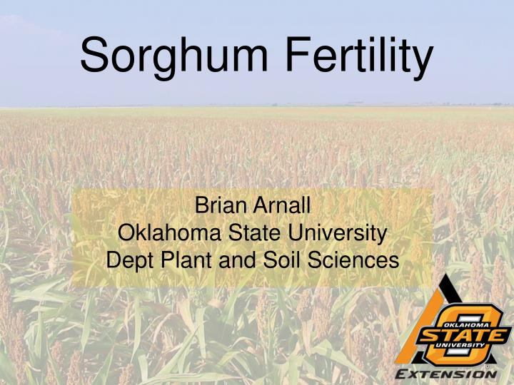 Sorghum fertility