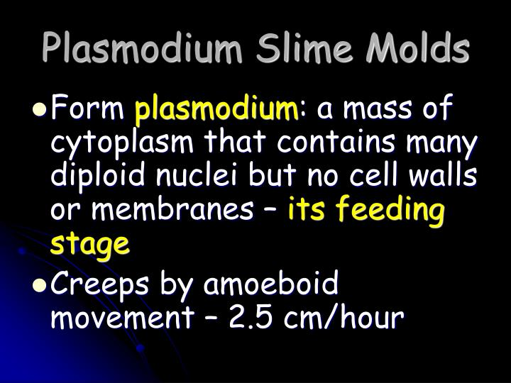 Plasmodium Slime Molds