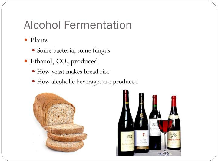 Alcohol Fermentation