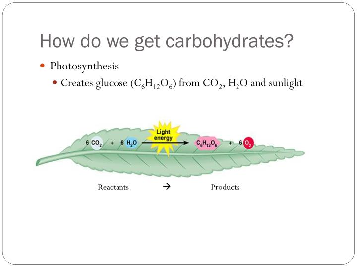 How do we get carbohydrates?