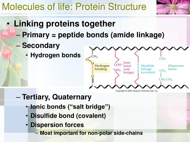 Molecules of life: Protein Structure
