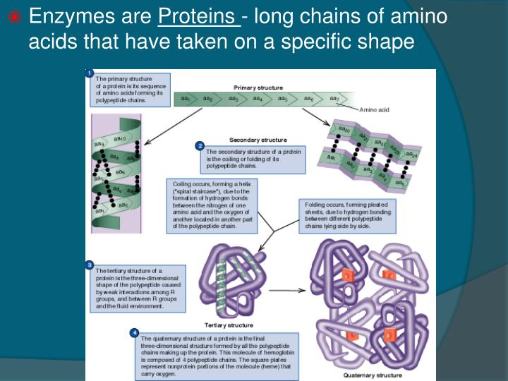 Enzymes are