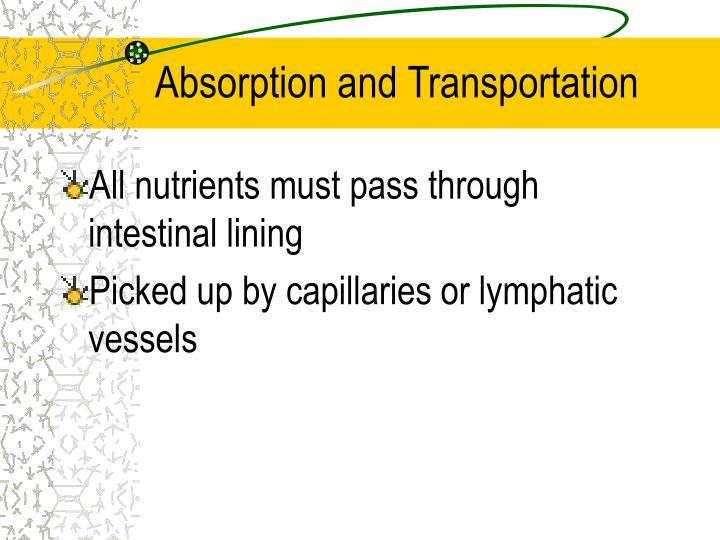 Absorption and Transportation