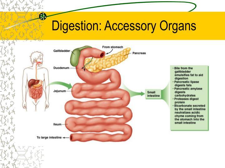 Digestion: Accessory Organs