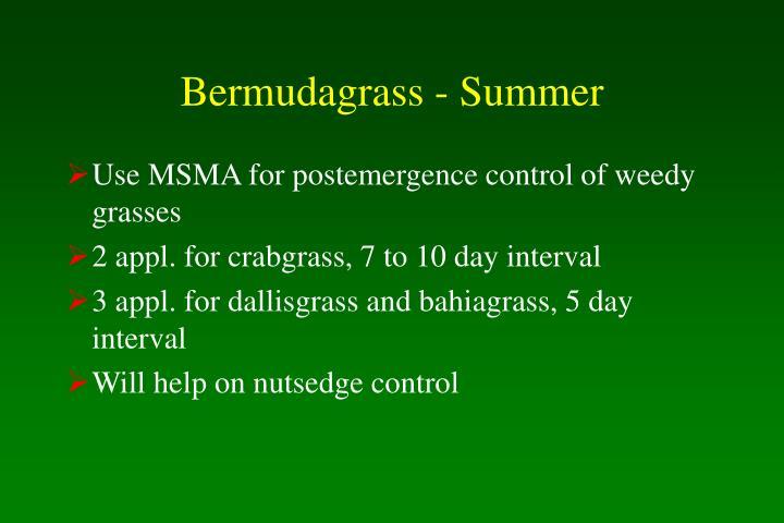 Bermudagrass - Summer
