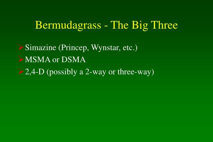 Bermudagrass - The Big Three