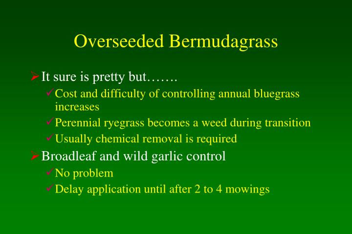 Overseeded Bermudagrass