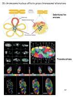 3d chromosome nucleus affects gross chromosomal alterations
