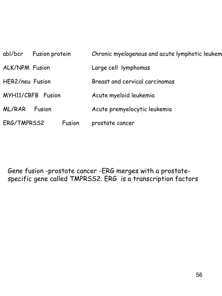 abl/bcrFusion protein Chronic myelogenous and acute lymphotic leukemia