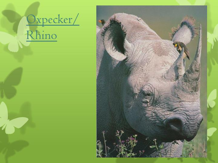 oxpeckers and rhinos relationship quizzes
