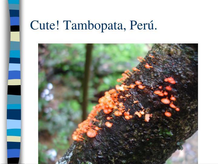 Cute! Tambopata, Per