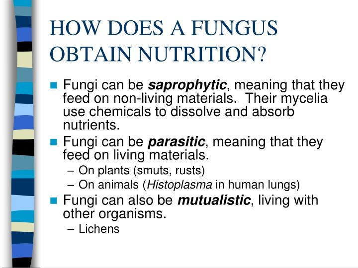 How does a fungus obtain nutrition