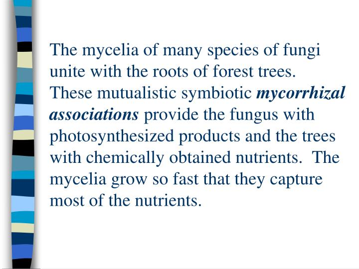 The mycelia of many species of fungi unite with the roots of forest trees.  These mutualistic symbiotic