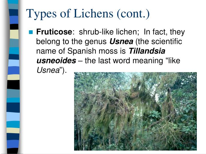 Types of Lichens (cont.)
