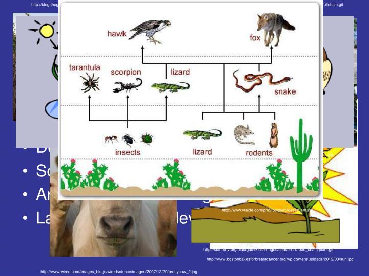 http://blog.thegreenplate.org/wp-content/uploads/2010/09/SoilNG.jpg