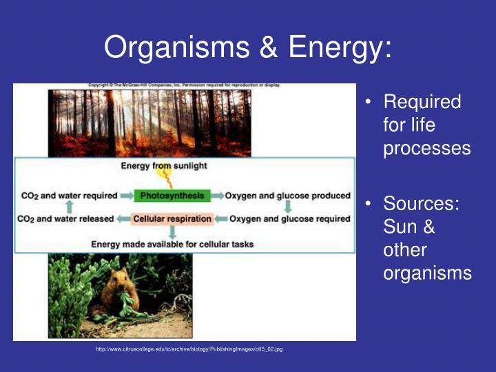 Organisms & Energy: