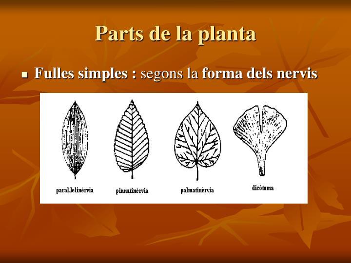 Parts de la planta