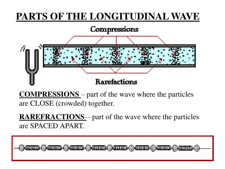 PARTS OF THE LONGITUDINAL WAVE
