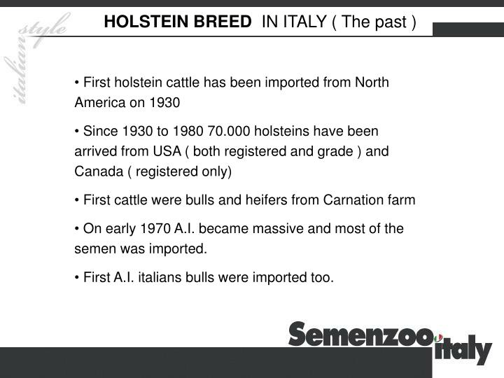 HOLSTEIN BREED