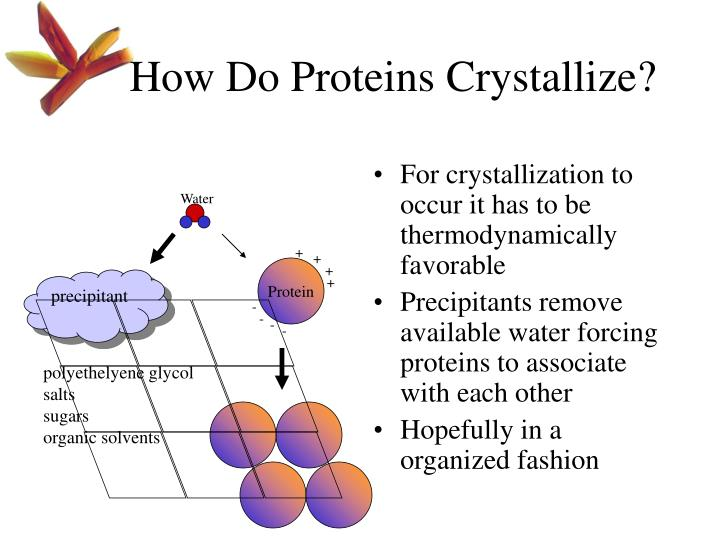 How Do Proteins Crystallize?