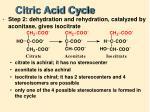 citric acid cycle2