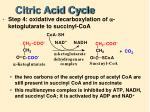 citric acid cycle5