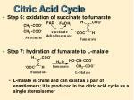 citric acid cycle7