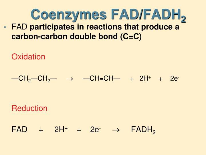 Coenzymes FAD/FADH