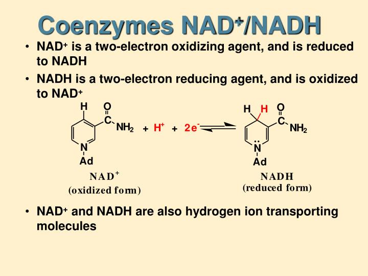 Coenzymes NAD