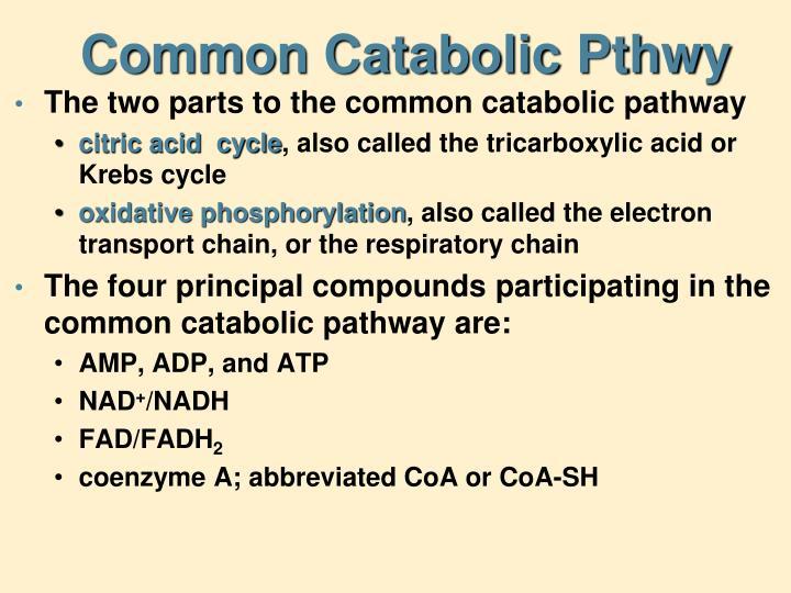 Common Catabolic Pthwy
